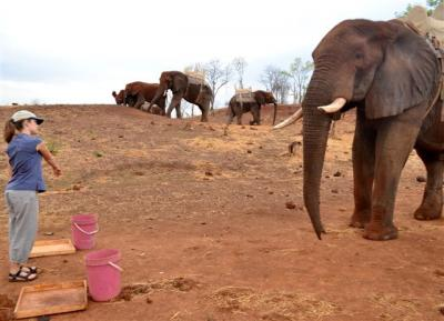 Elephants Know What It Means to Point, No Training Required