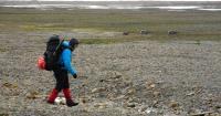 Martin Kristiansen Walks by a Group of Reindeer on Prins Karls Forland