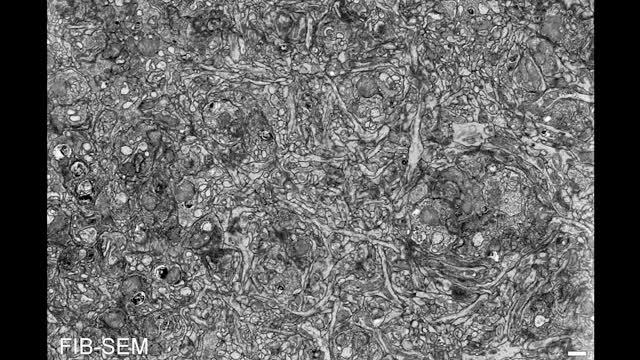 Nanotubes (video)
