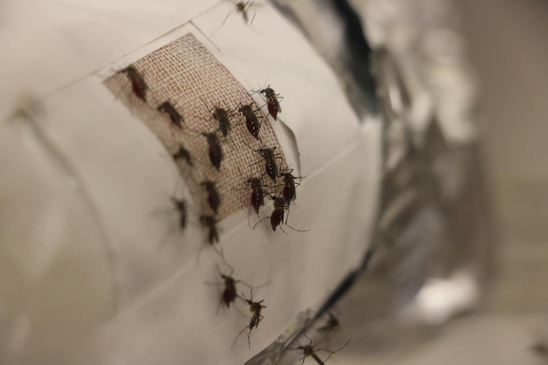 Mosquito Experiments