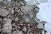 Cape Irizar bones emerging from snow.