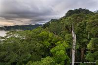 View of the Ulu Temburong National Park in Brunei from the Canopy Bridge