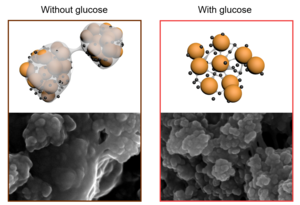 Role of glucose