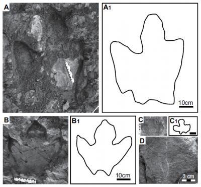 Figure 3 from Fiorillo et al.