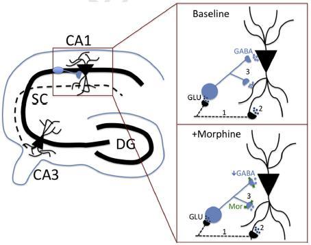Microcircuitry in the Brain