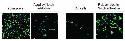 Stem Cell Activity