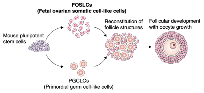 Schematic diagram of the experiment
