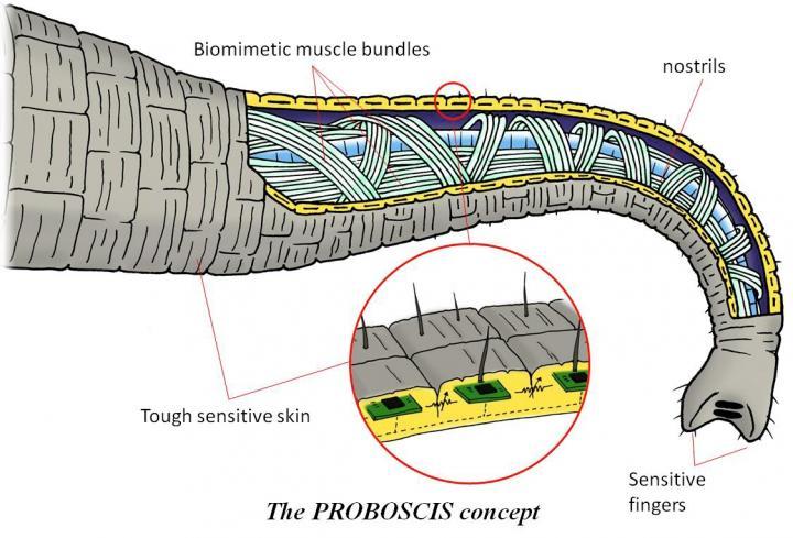 Infographics - Proboscis