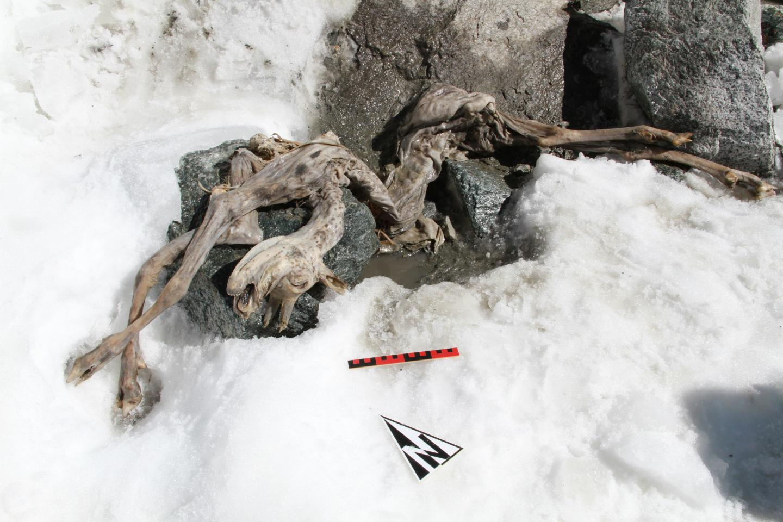 A perfect simulant of a human ice mummy
