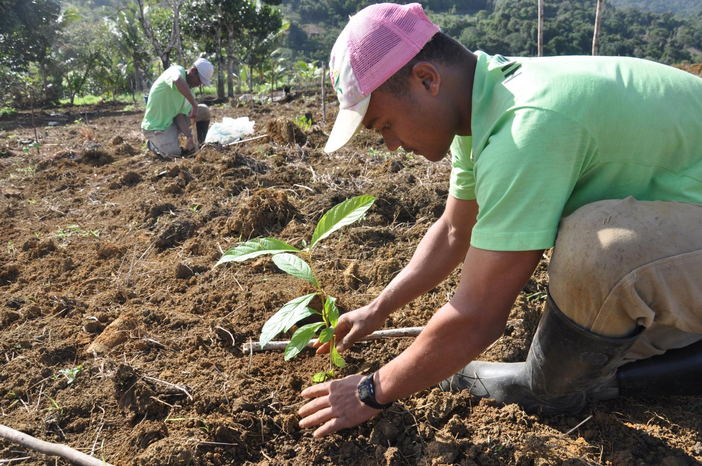 Planting Trees Is No Panacea for Climate Change