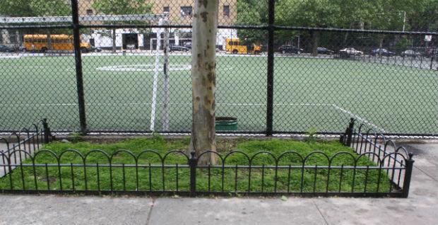 NYC Tree Guard