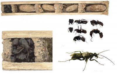 'Bone House' Wasp Nest Protection