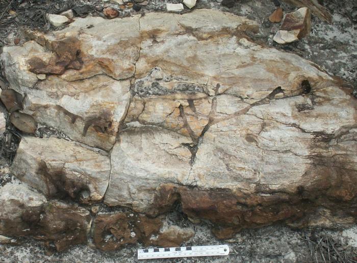 Bruce Runnegar quartzite unage