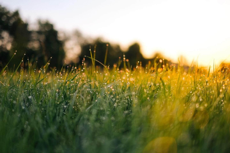 Filtering Grass