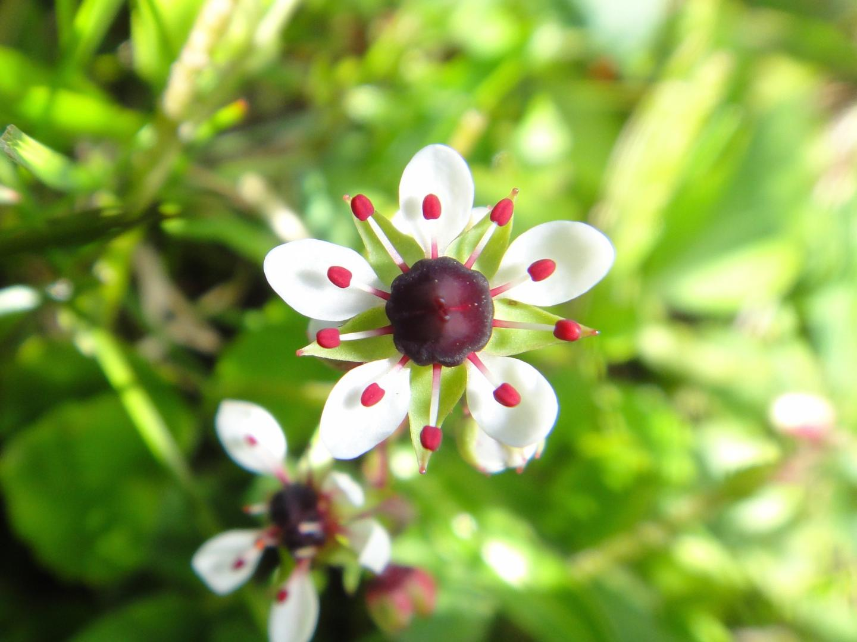 Former Wallflowers Became Globetrotters