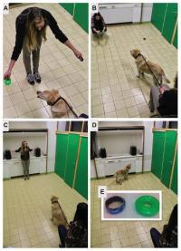 Experimental set-up for dog's behaviour's researche
