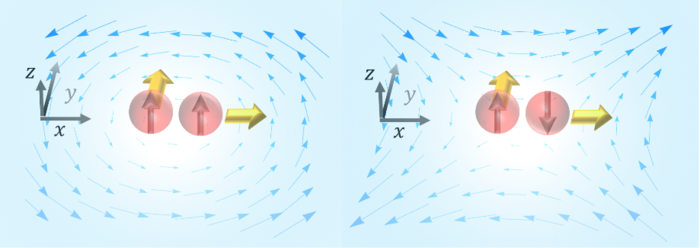 left: the polarization induced by the vortical flow; right: the polarization induced by the shear flow.
