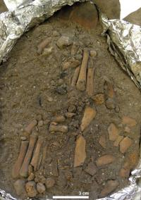 Articulated left foot (bottom left) and right foot (centre) excavated in the ANU laboratory