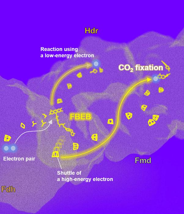 Electron-transfer pathway