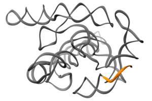 Ribozyme self-splicing in action