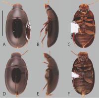 Examples of Chasmogenus