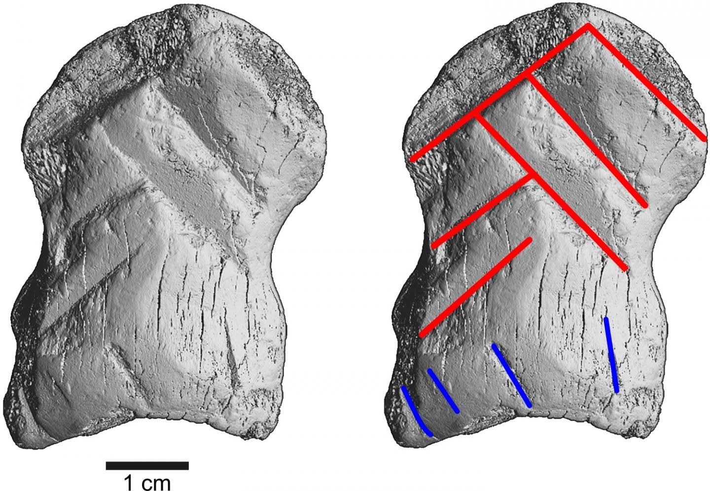 scan of carved bone (in grey)