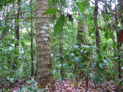 Gigante Forest