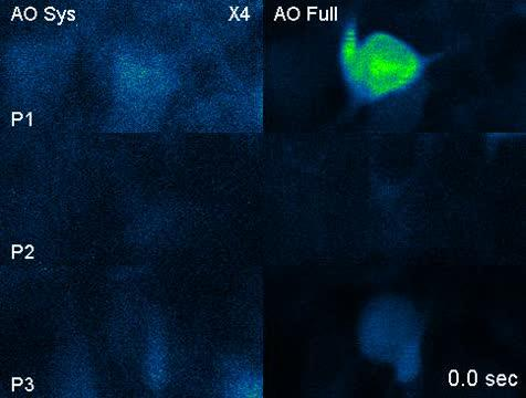 AO imaging system can clearly resolve the tightly packed neurons with the calcium transients accurately recorded and without interference from neighboring neurons