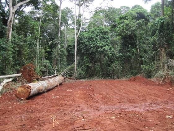 Dartmouth Sustainable Tropical Forest Policies Study