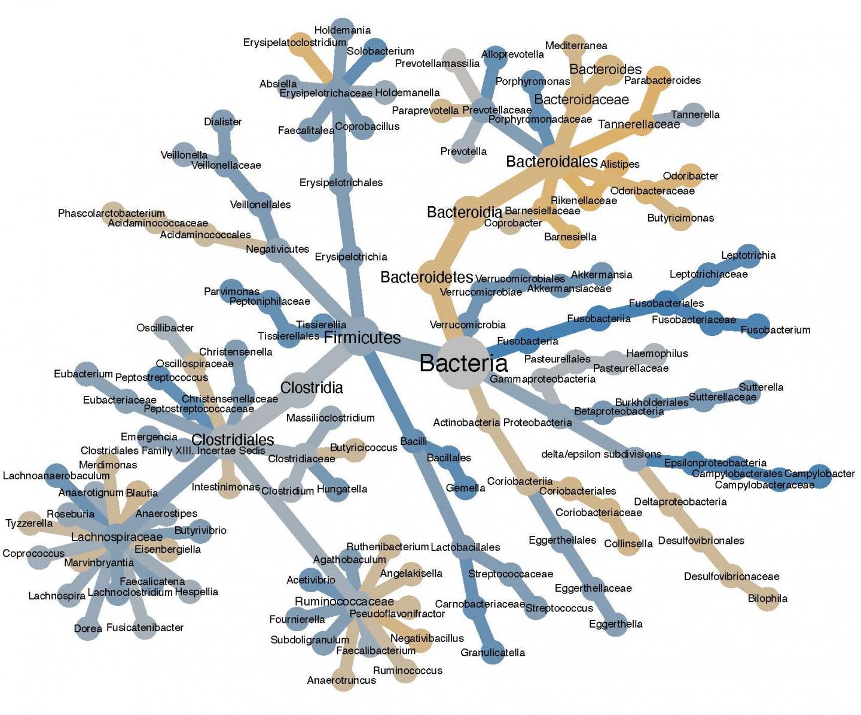 Cancer Bacteria Tree
