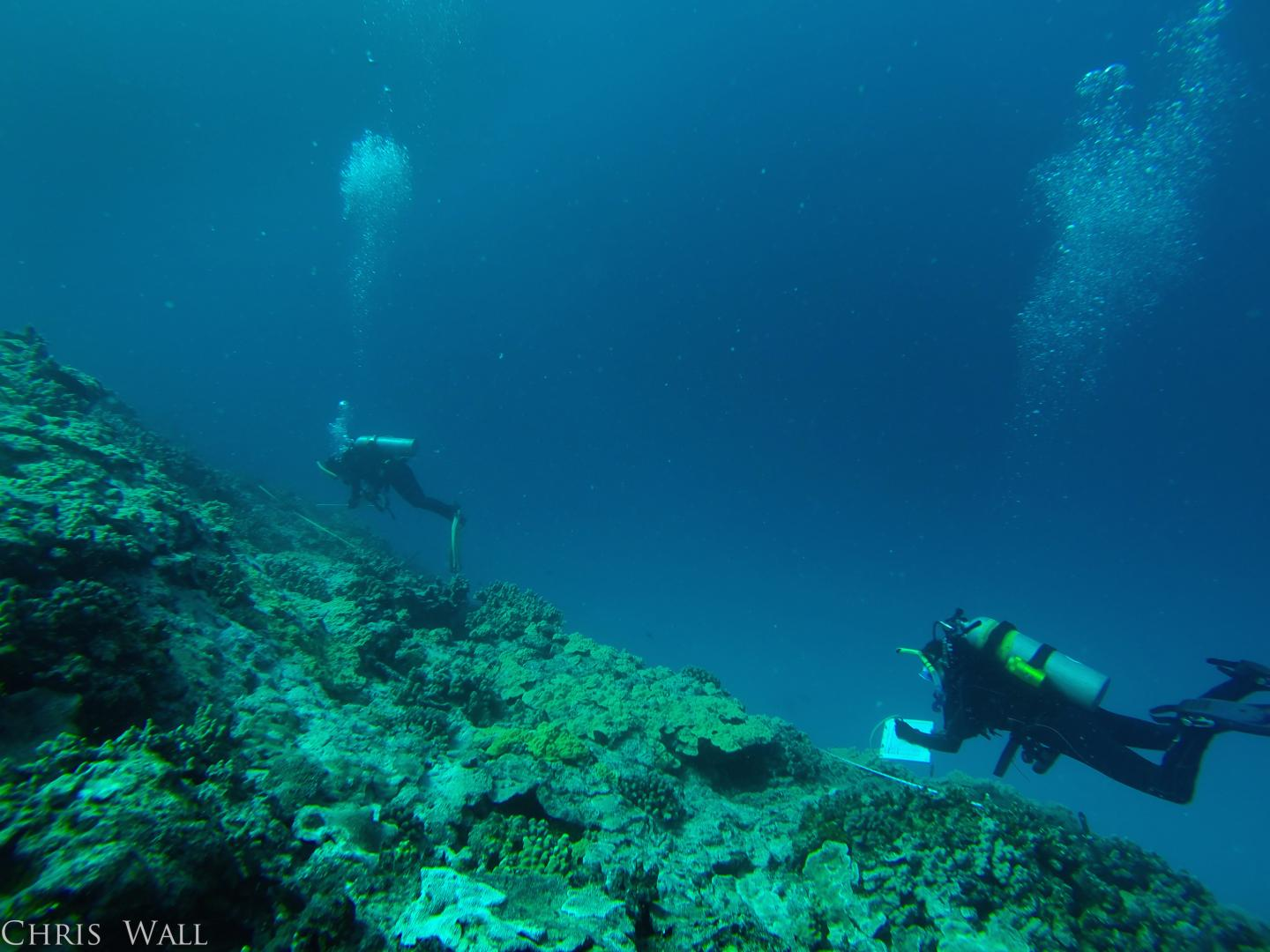 Divers Surveying Coral Health