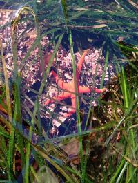 Sea Grass Beds
