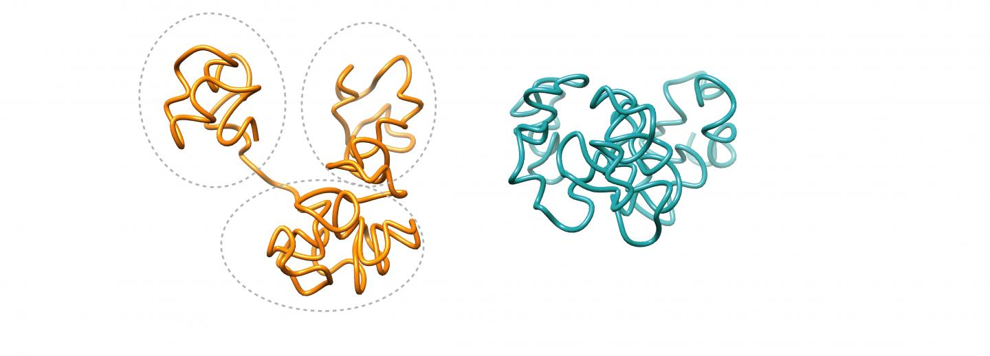 Pictured: Region of a human genome with CTCF (left) and without (right)