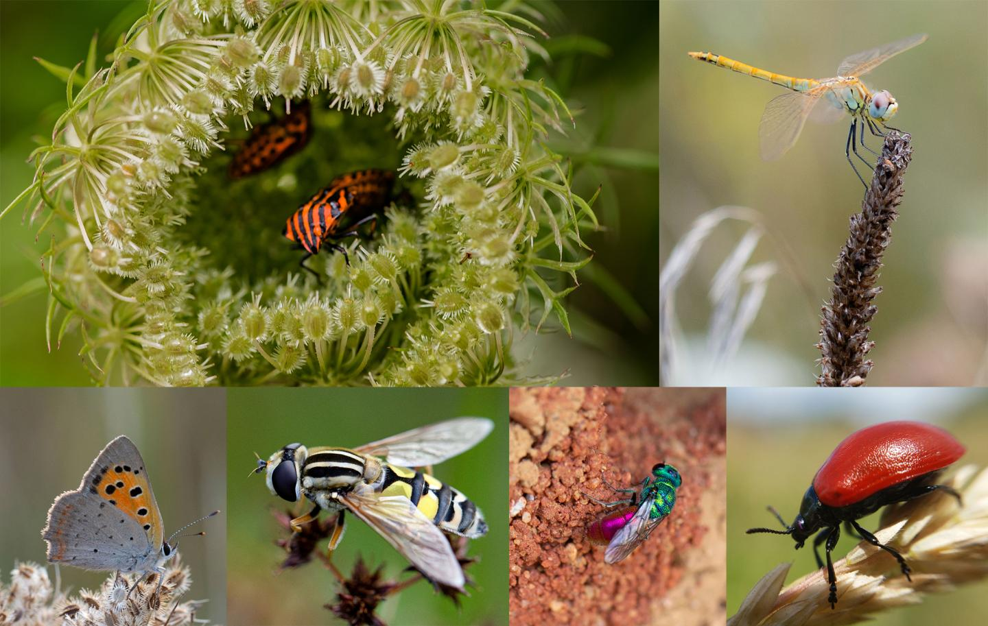 Insects United for Recovery!