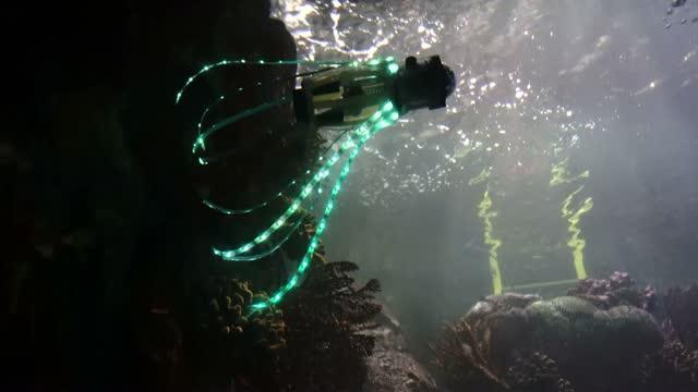 Squid-Inspired robot at the Birch Aquarium