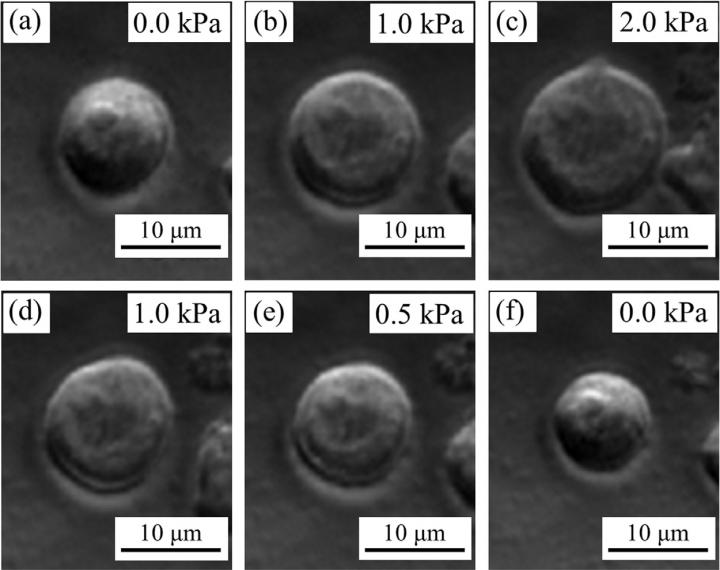 Images of Cell Compression by a New Cell Compresion Microdevice