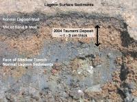 Lagoon Surface Sediments