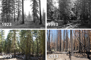 Fire exclusion over time