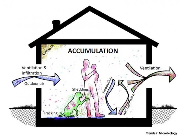 Sources of Indoor Microbial Communities