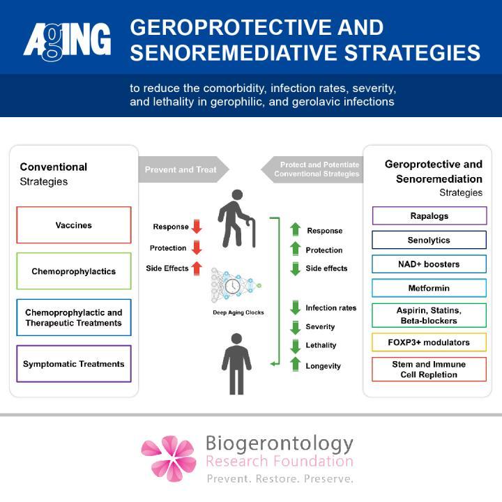 Geroprotective and Senoremediative Strategies