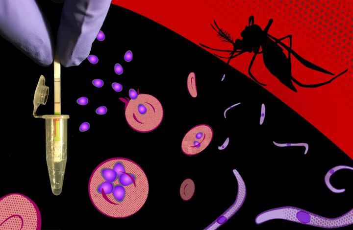 Ultrasensitive and species-sprecific CRISPR-based malaria diagnostic assay