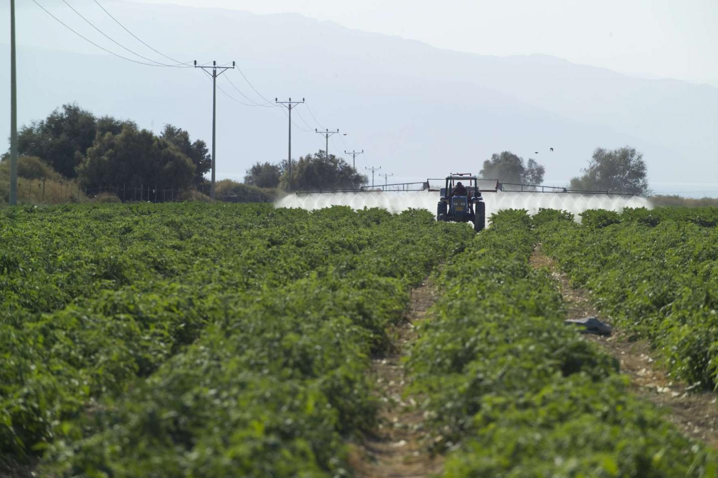 Use of Insecticides in the West Bank