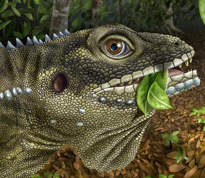 A Prehistoric 'Lizard King' Named for Morrison