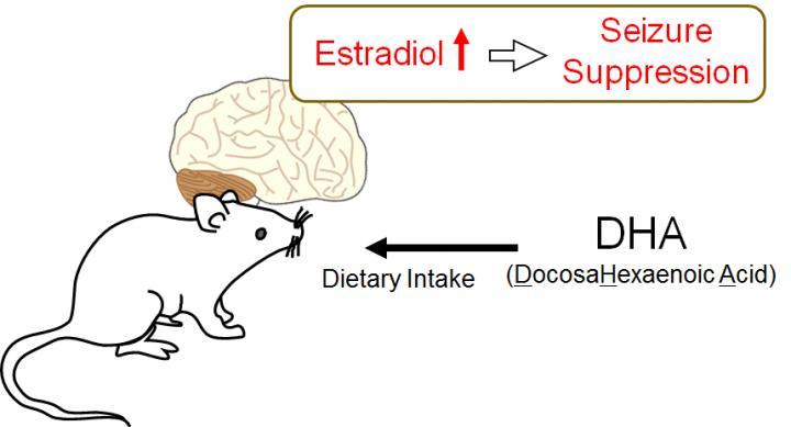 Diet Influences Seizure Suppression