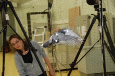 Analyzing Flight of a Racing Pigeon