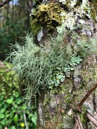 Lichens (1 of 2)