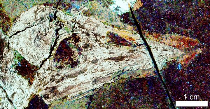 Confuciusornis Imaged with LSF