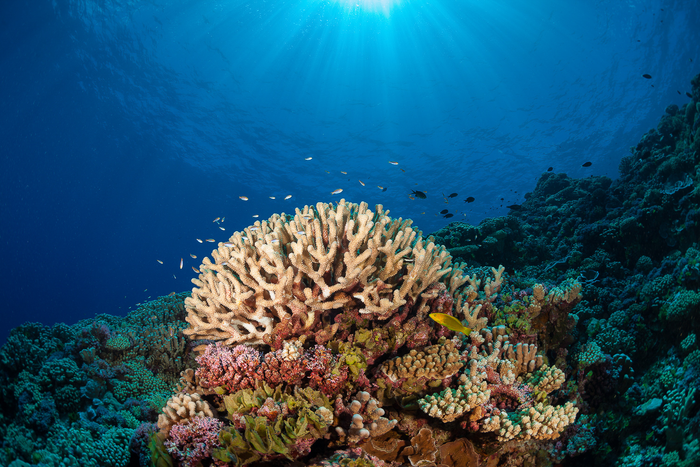 The Khaled bin Sultan Living Oceans Foundation Completes the Largest Coral Reef Survey and Mapping Expedition in History