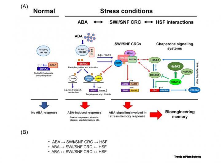 Plants Stress Response