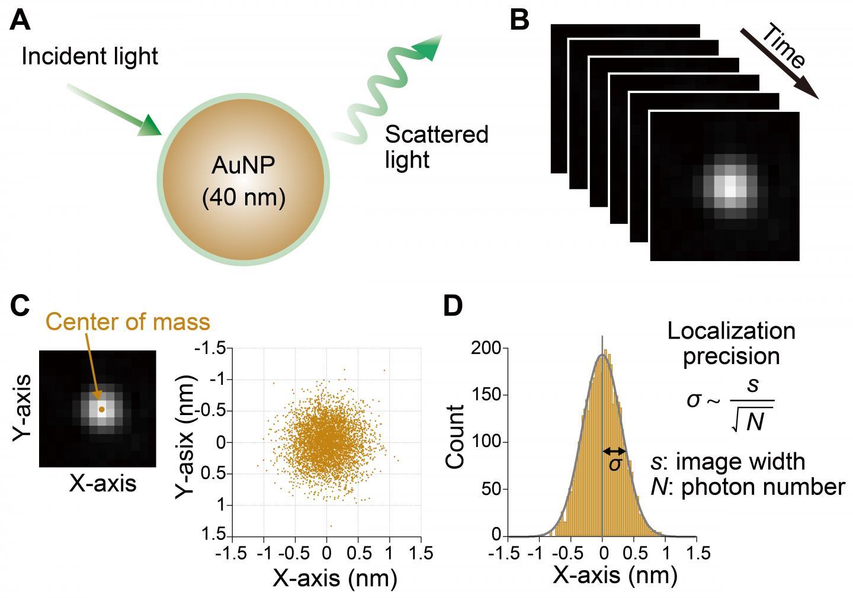Precision of AuNPs